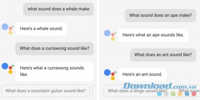Hỏi âm thannh của cá voi qua Google Assistant