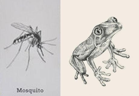 Ảnh ghép muỗi và ếch 4D