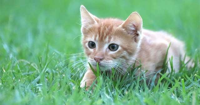 Mượn lời của con mèo để kể tình cảm của em