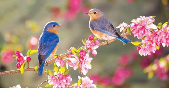 Ý nghĩa nhan đề bài thơ Mùa xuân nho nhỏ