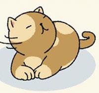 Tổng hợp cách chăm sóc mèo Adorable Home hiệu quả nhất