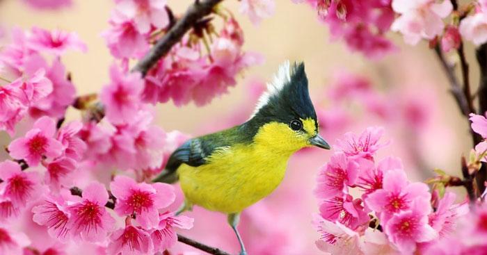 Phân tích khổ 2 và 3 bài thơ Mùa xuân nho nhỏ