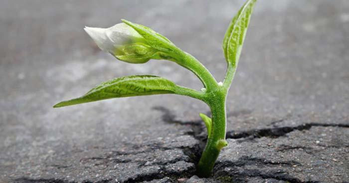 Nghị luận về cách vượt qua nghịch cảnh trong cuộc sống