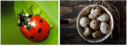 Giới thiệu một số hình ảnh về chấm trong tự nhiên