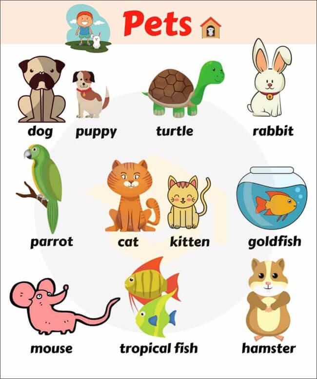 Từ vựng kèm hình ảnh các con vật bằng tiếng Anh