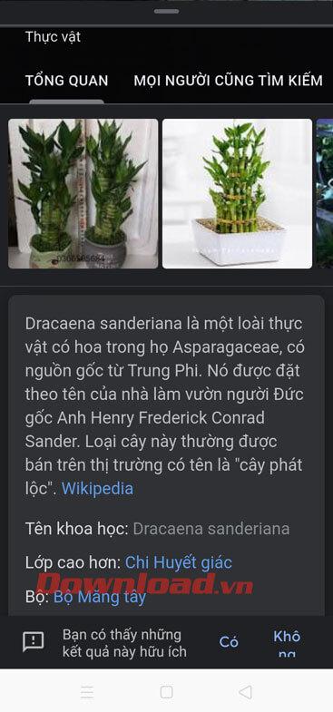 Thông tin chi tiết của cây
