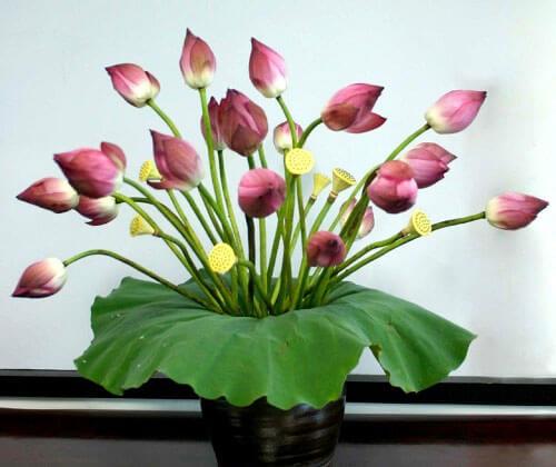 Cắm hoa Sen