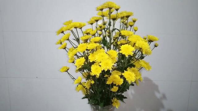Cắm hoa Cúc
