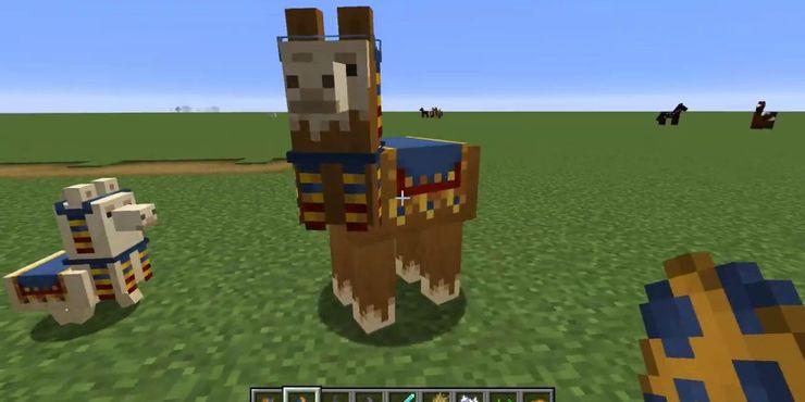 Lạc đà cửa Wandering Trader trong Minecraft